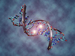Evolution – Theorie, Tatsache, Glaube und Wahrscheinlichkeit